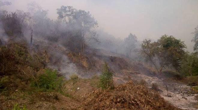 incendio sestri levante, fossa lupara, bosco in fiamme