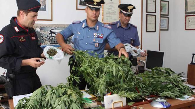 piantagione marijuana lusignano