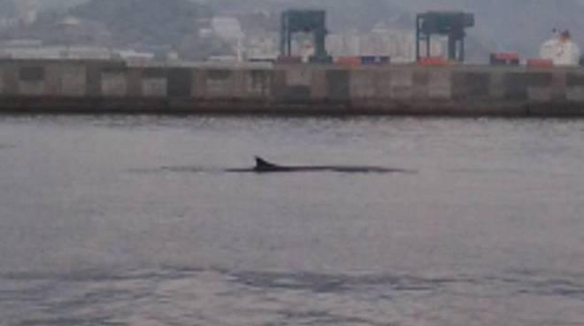 balene nel porto di genova