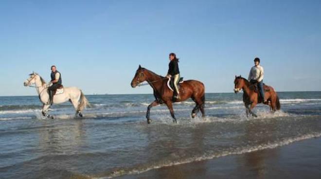 cavalli spiaggia