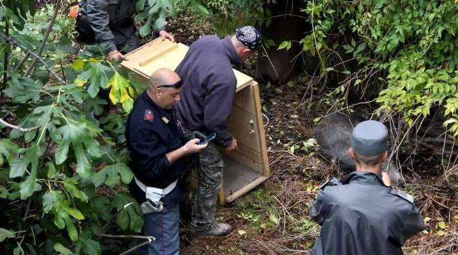cinghiali a savona: recupero polizia provinciale