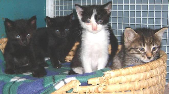 cinque gattini