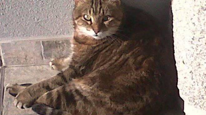gatto adozione