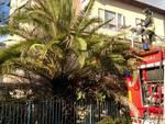 incendio tettoia e palma loano