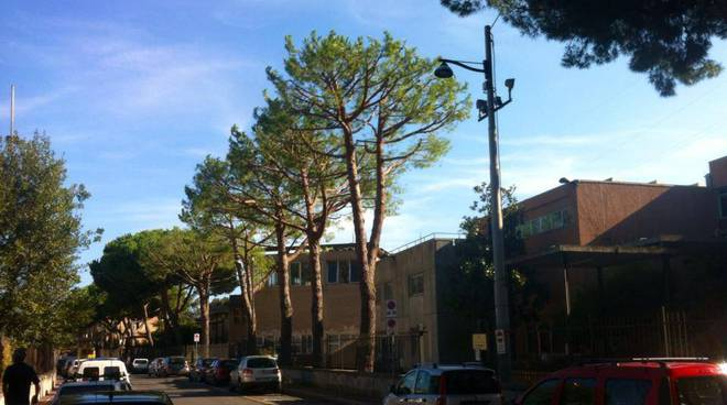 potatura alberi albenga