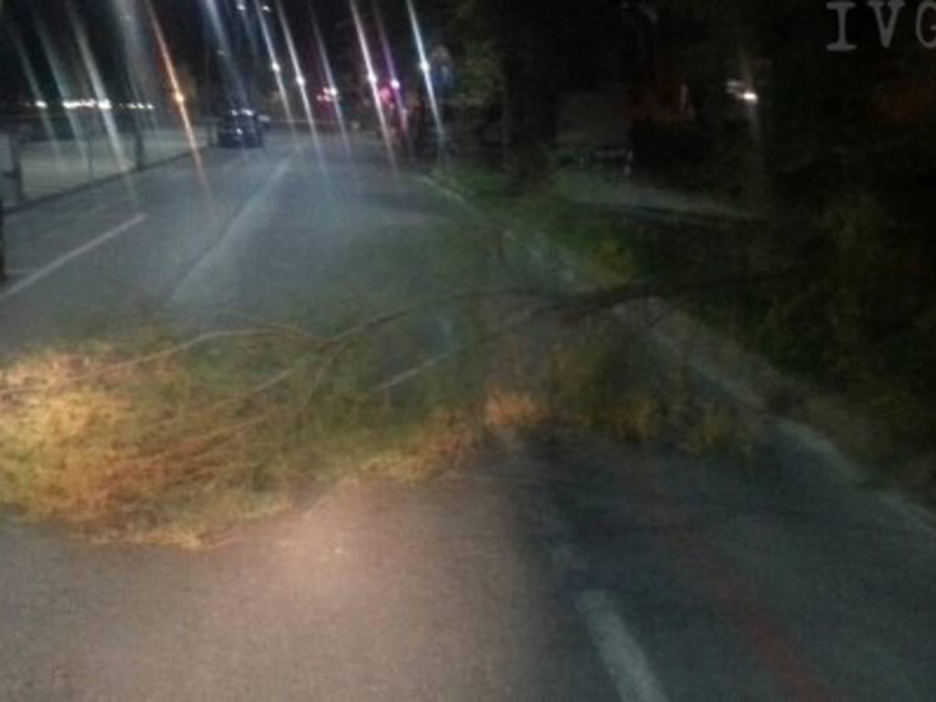 danni vento, albero divelto