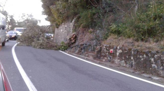 danni vento novembre 2013