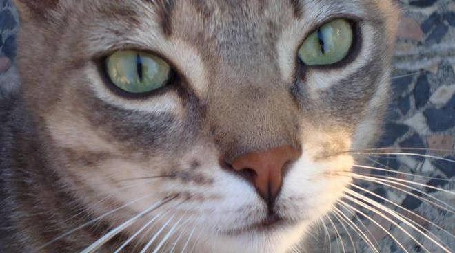 gattino perso via trento