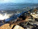 Cinghiale spiaggiato mareggiata