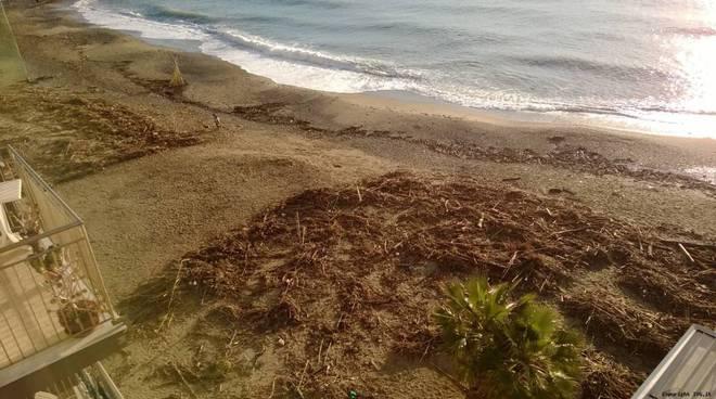 legname su spiaggia detriti