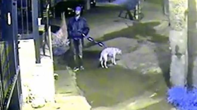 """""""Luna"""" abbandonata sotto la pioggia davanti al canile, legata ad un palo: il video immortalato dalla telecamera"""