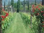 Agriturismo fiori generica