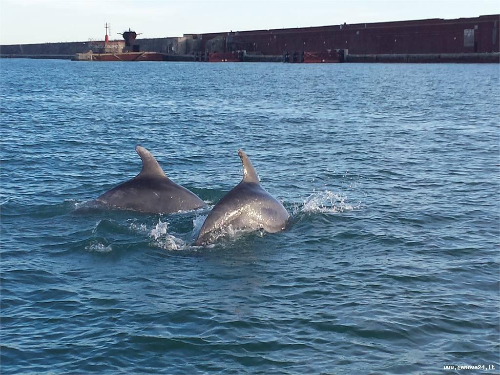 delfini porto genova