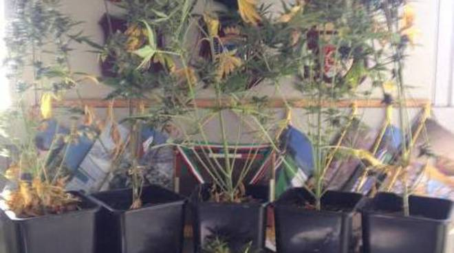 Impianti di illuminazione per serre serra di cannabis in casa