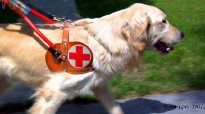 cane guida per ciechi non vedenti