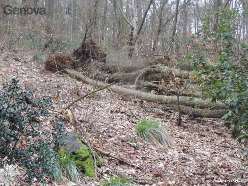 maltempo, alberi collassati caduti monte portofino