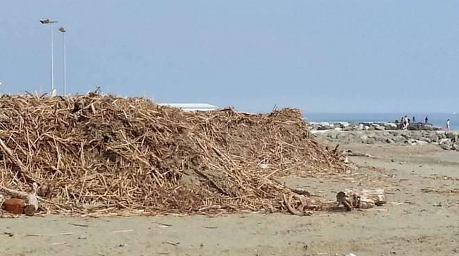 legna spiaggia albissola
