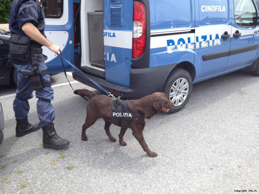 allarme bomba cani artificieri
