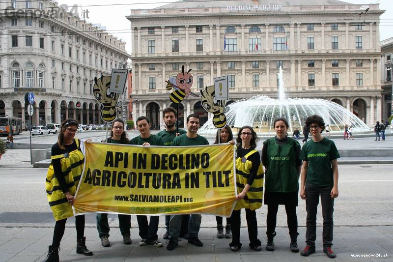 api greenpeace