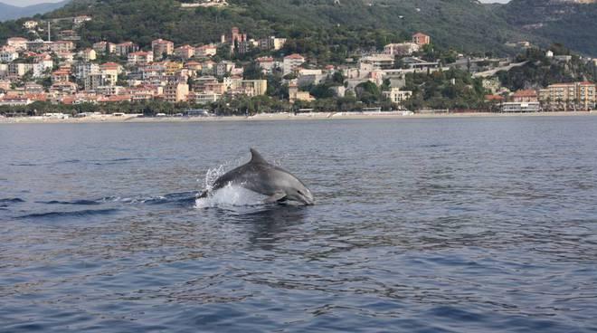 delfino finale santuario pelagos