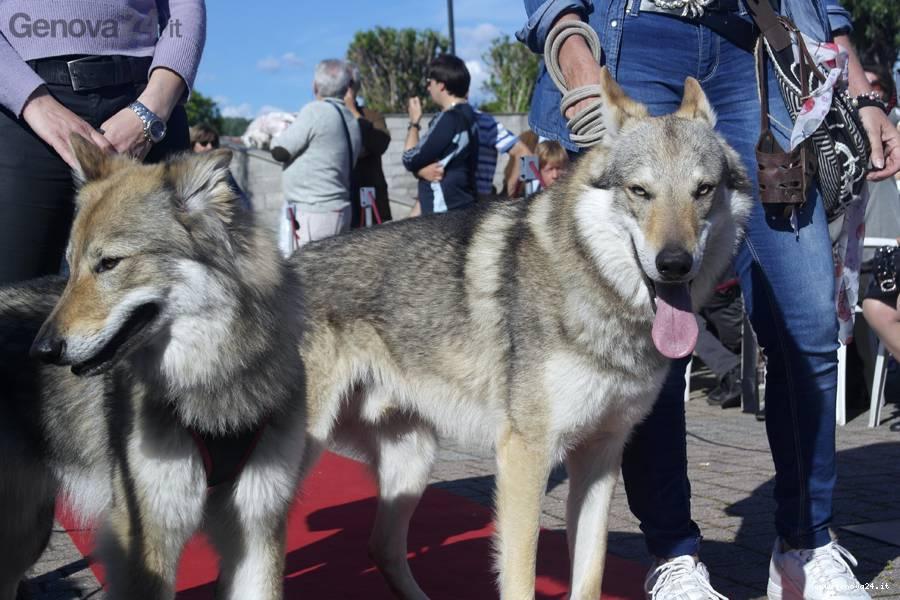 filata cani ipercoop aquilone