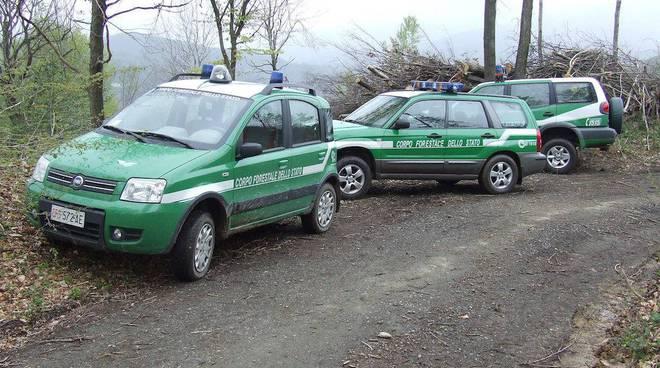 guardia corpo forestale