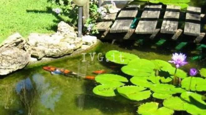 vasche per pesci rossi da giardino acquario per pesci