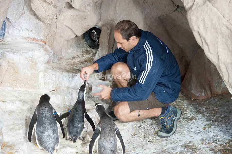 Pinguini di Magellano acquario di genova