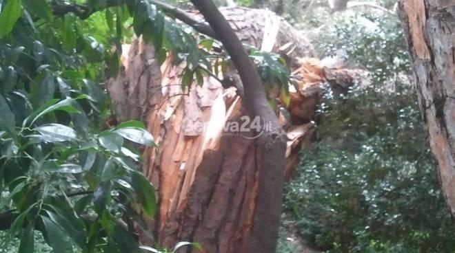 albero caduto villa rossi
