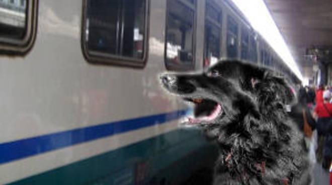 cane e treno