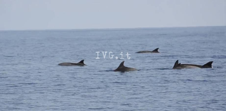 delfini loano