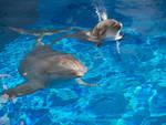 delfino delfini