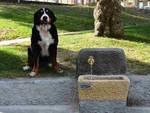 fontanella cani andora