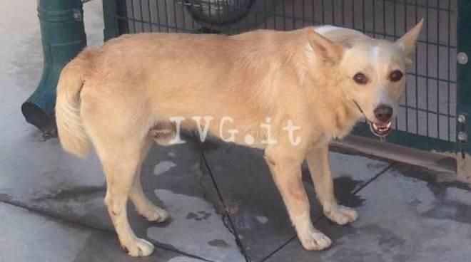 Nuovi cani Canile Savona