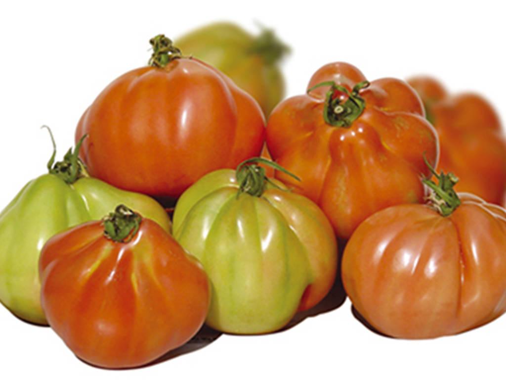 Pomodoro Cuore di Bue Albenga