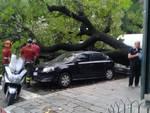 albero piazza manin