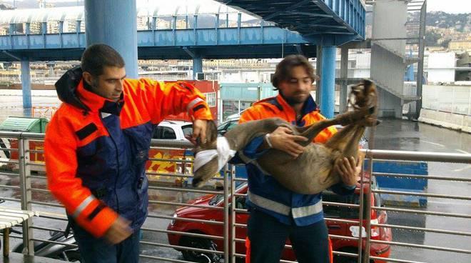 enpa animali recuperati alluvione 9 ottobre
