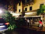 albero caduto lungomare rapallo
