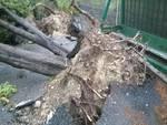 basko alberi abbattuti