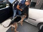 cane guardia di finanza