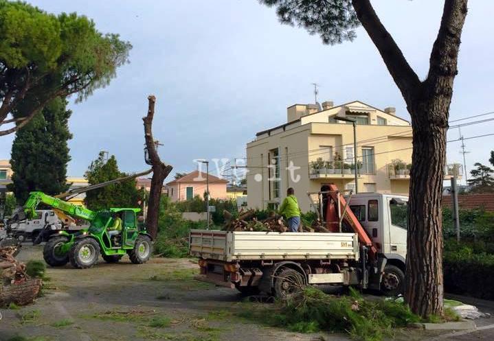 Loano, abbattimento pini
