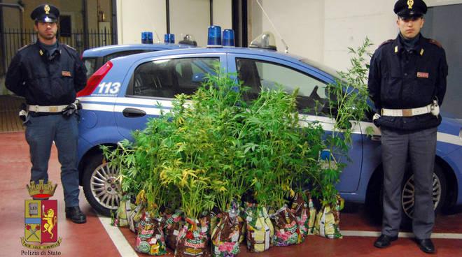 serra marijuana chiavari