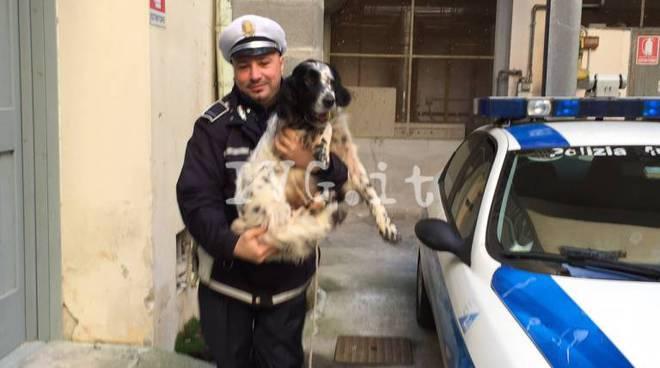 cane municipale finale