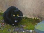 gatto orfano
