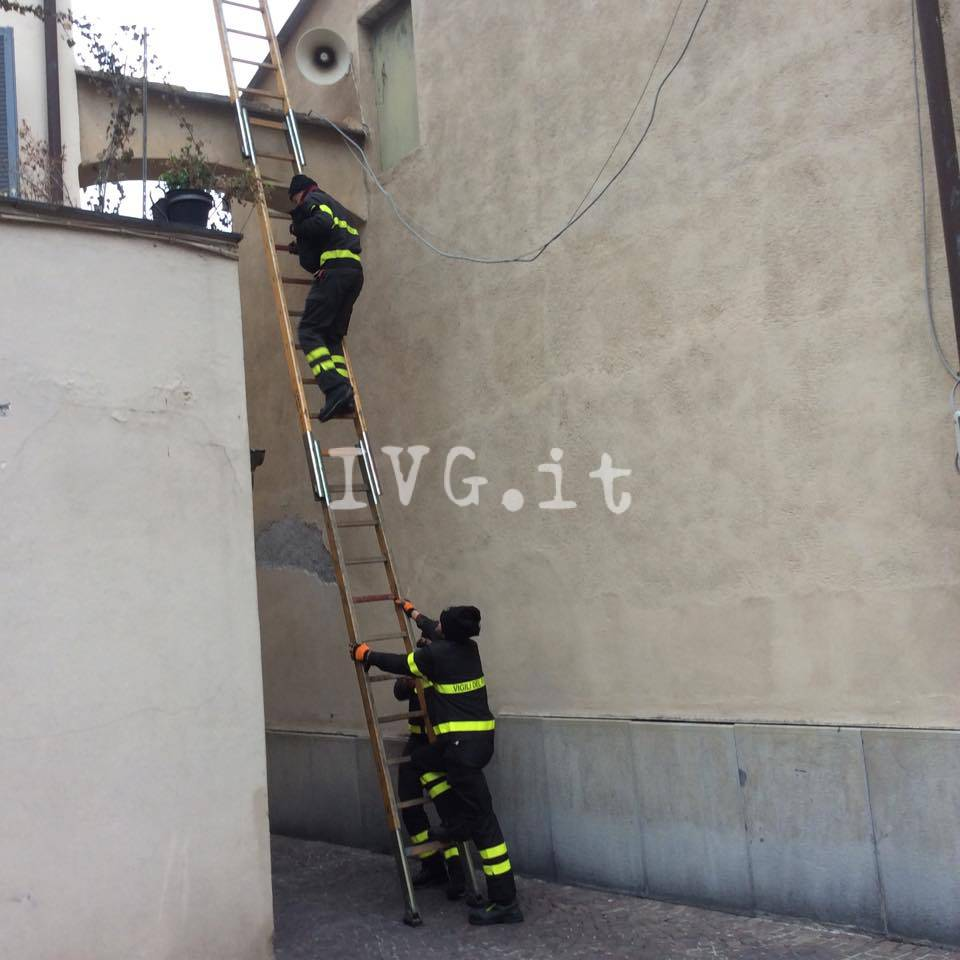 Albenga, i vigili del fuoco soccorrono un micio intrappolato su un cornicione in centro storico