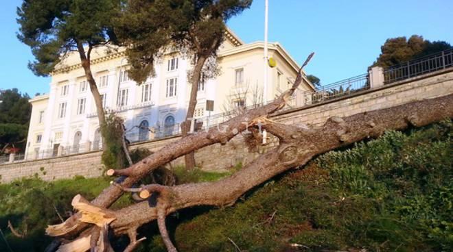 albero abbattuto su ferrovia