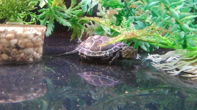 Novit all 39 acquario uova giganti e musica il fine for Acquario tartarughe grandi
