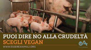 autobus vegan
