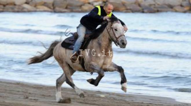 cavallo onde