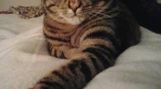 gatta mimì scomparsa